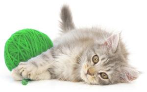 Gato con ovillo de lana, imagen de la home de la web simple.cat